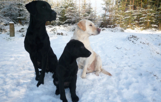 Cuillin, Holly and Laggan in snow